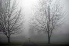 A boy and his football (Lostinplace) Tags: boy football fog trees symetry monotone