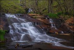 El agua y el bosque. (antoniocamero21) Tags: árboles hayas rocas foto color sony montseny barcelona catalunya natural parc