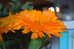 Small Batch (cshelleybrown) Tags: shop coffee orange flower brighton hove small batch nikon d3300