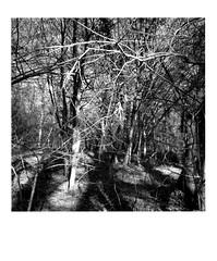 DIAP WOOD 006 (Dominiq db) Tags: diapo séries wood trees arbres forêt nature