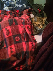 He likes his blanket - The Caturday (TheCaturday) Tags: caturday kittens kitty cat cats kitten cute catsagram catsoftwitter catsofinstagram