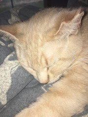 this is sandy and she likes cuddling with me by going into any... - The Caturday (TheCaturday) Tags: caturday kittens kitty cat cats kitten cute catsagram catsoftwitter catsofinstagram