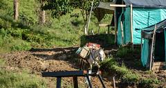 DSC_7844 (Diegomaxp) Tags: diegomaxp visita de estudiantes la universidad nacional colombia al departamento del tolima municipio icononzo una las zonas veredales transitorias normalización zvtn facultal medicina veterinaria y zootecnia