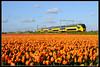 NSR-9572_Hil_23042017 (Dennis Koster) Tags: ns nsr trein personentrein passagierstrein hillegom bollenveld tulpen virm 9572