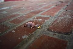 (John Donges) Tags: dead animal bird baby newborn featherless brick 0031