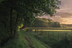 Eifel (Netsrak) Tags: eifel path way weg tree trees baum bäume light licht nebel fog mist fence zaun