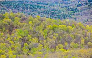 Spring Colors  From Gobbler's