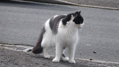 Look Left  Look Right (claire artistandpoet Stroke Survivor) Tags: fur cat black white fluffy pussy gato