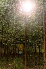 O Sol entre as árvores. (Luiz Leite7) Tags: brilho luz vermelho azul branco mato plantas galhos grama verde folhas céu montanha serra campo terra horizonte dia sãopaulo brasil