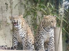 Zoo de Champrépus (Bérénys) Tags: zoo zoodechamprépus champrépus normandie bassenormandie animaux animal