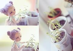 ☆ Spring Spirits ☆ (Shimiro Kestrel) Tags: bjd doll abjd fairyland pukifee ante pukifeeante cute tiny kawaii pastel pastelhair pastelgirl bjdphotography bjdportrait bjdcustom dollphotography miniature