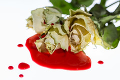 La reine rouge (g_raph1979) Tags: naturemorte rose lewiscarroll blanc rouge red white