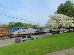 Amtrak 151 and 821 (Trains & Trails) Tags: amtrak genesis p42dc widecab engine locomotive diesel transportation passenger train railroad connellsville pennsylvania 151 tree april blossoms springtime flowers