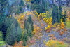 COLOR ON THE STEEP MOUNTAIN HILLS.  HOPE-PRINCETON,   BC. (vermillion$baby) Tags: hopeprinceton autumn color forest gold moutain tree yellow mountainf caascades northcascades colora