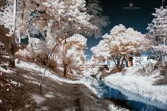 Marginal ponte infravermelho 02 (Christian Cardoso.) Tags: grass trees infra infrared infravermelho ir infr infrareds fine fineart sky nikon d70 d70s nature cidadedepiedade piedade false collor river bridge