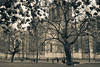 York Minster gardens in springtime (cracurs) Tags: blossom 35mm 35mm24 yorkminster blackandwhite canon carlzeissjena church flektogon lightroom lightroom3 london m42 manualfocus manuallens postprocess preset primelens trees bw canon5dmk1 architecture