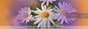 Fine-Art-Print-DSC-4578 (fatima_suljagic) Tags: flowers fineartprints photoprints canvasprints flower collection royaltyfreeimages photographer melbourne melbournephotography melbournephotographer australianphotographers australia nature naturephotographer nikond800