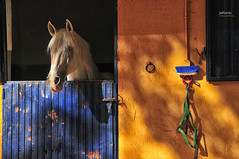 (277/17) Eclipse (Pablo Arias) Tags: pabloarias photoshop photomatix nxd españa caballo cuadra colores laadrada elvalledeltietar ávila comunidadcastillaléon