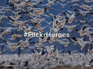 Flickr Heroes of the Week