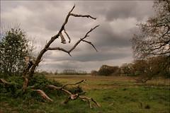 Mooi Westerwolde (TeunisHaveman) Tags: boom natuurgebied terwupping onstwedde westerwolde braam voorjaar springtime ngc