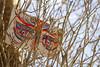 Festival Visionário por Suzy Luna (Coletivo BoiKOT) Tags: festival trance psy psytrance psicodelia psychedelic altinho caatinga sertão semiárido agreste cacto mandacau mandacarú tenda