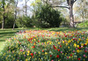 06-IMG_8779 (hemingwayfoto) Tags: blühen blüte blume farben gartenblume narcissen natur park pflanze rethen tulpe