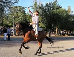 Mundo del caballo-Carrera de cintas a caballo-Alameda (Málaga) (lameato feliz) Tags: caballo jinete carreradecintasacaballo alameda málaga