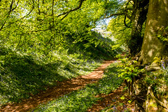 Mystical (Keith in Exeter) Tags: path ditch dappled shade light tree branch foliage grass bluebells flowers coneys castle hillfort dorset england landscape outdoor woodland mystical nationaltrust
