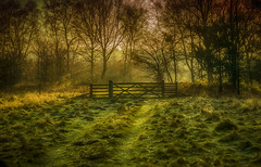 Paddock Gate (Trev Bowling) Tags: clumber park gate national trust forest 2017 wood sun rise early morning am january grass field paddock