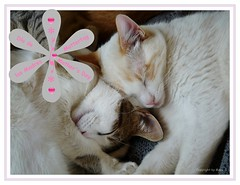 Für alle Mamas welche heute ihren Tag feiern * For all mothers who celebrate their day today * Para todas las madres, que hoy celebran su día *  EXPLORED THANK YOU ♥  .  P1050859-1 (Maya HK - On and Off) Tags: 140517 2010 animales animals cats copyrightbymayawaltihk díadellamadre2017 felicidades flickr gatos glückwünsche glückwunschkarten greetings katzen mothersday2017 muttertag nartus panasonicfz28 sternli tiere explore explored14052017 explored