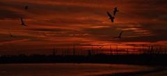 Evening Delight (beachpeepsrus) Tags: dusk sunset sihlouette sky water westcoast