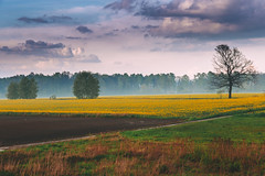 Somewhere in the fields (kubaszymik) Tags: fields landscape fog foggy mist misty rain sun clouds sky forest tree trees canon vsco poland silesia green yellow spring may path road countryside