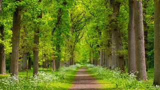 Spring path through estate Mildenburg