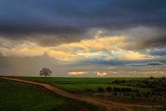 Segunda oportunidad (AvideCai) Tags: avidecai arbol tamron2470 atardecer nubes cielo paisaje sobarriba