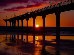 In Hot Water (Steve Taylor (Photography)) Tags: bird gull seagull lamp lamppost light black mauve purple orange yellow newzealand nz southisland canterbury christchurch newbrighton beach ocean pacific pier sea waves silhouette reflection dawn autumn sunrise sky cloud sun sunny column