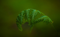 Into the Woods-3280-2 (EB_Creation) Tags: member'schoiceintothewoods intothewoods hmm macromondays wood forest nikon d7100 amateur lens camera spring 2017 monday green sigma 170700 mm f2840 170700mmf2840