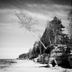 Loosing the base (MarxschisM) Tags: instagramapp square squareformat iphoneography uploaded:by=instagram inkwell latvia thisislatvia sea beach sand tree travel