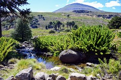 Camino a Las Lecheras (pepelara56) Tags: montañas arroyo agua colihues araucarias cielo patagonia argentina