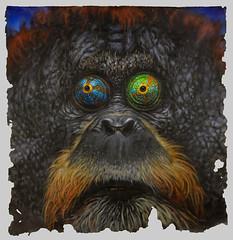 Chameleotan (Evan Skrederstu) Tags: evanskrederstu uglar uglarworks chameleotan chameleon orangutan zooilogical chimera hybrid