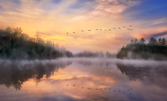 Autumn in me (Dragan Milovanovic photography) Tags: autumn trees canada sky sunrise fog morning lake birds water reflection geese sun light clouds fall goose flight landscapes mood quebec waterscape flying flock scenery foggy kingsbury sonyilca77m2 draganmilovanovicphotography sonyslta77ii easterntownships sunlight river rivieresaintfrancois