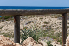 Orizzonti (NIKOZAR (Nicola Zaratta)) Tags: mare marinadilizzano taranto mediterraneo fiori macchiamediterranea puglia italy dune sabbia nikond750 nikkor24120 marjonio