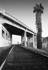 san diego : torrey pines bridge (William Dunigan) Tags: san diego torrey pines bridge beach state park reserve railroad tracks black white photography bw monochrome ocean sea morning early surf surfer palm tree california socal southern southwest seascape