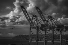 1941 (writing with light 2422 [not pro}) Tags: safecofield portofseattle cranes sunset bw seagull clouds richborder sonya77 washingtonstate monochrome