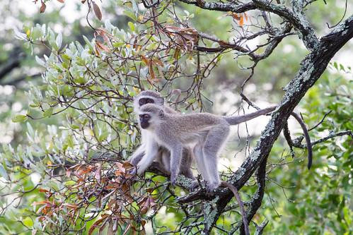 KrugerParkREIZ&HIGHRES-20