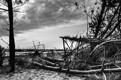 Cabane (cacid) Tags: 2016 hourtin océan vancances
