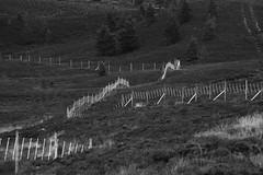 flippin fence fury - HFF! (lunaryuna) Tags: scotland cairngorms nationalpark heather reforestation protection fences fencesgalore fencefriday landscape blackwhite bw monochrome lunaryuna