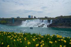 Niagara Falls in Spring (AncasterZ) Tags: niagarafalls americanfalls falls spring