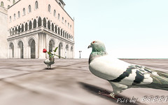 Fantasy Faire 2017 - Pigeons in Love (Poppys_Second_Life) Tags: popi popikone popikonesadventuresin2l popisadventuresin2l 2l secondlife virtualphotography poppy picsbyⓟⓞⓟⓟⓨ sl fantasyfaire2017 fantasyfaire love rose pigeons