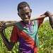 Farmer working in a field near Unaa village, Dollow, Somalia.