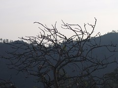 CHAMUNDI HILL MYSORE Photography by CHINMAYA M.RAO on  December 5, 2006 (122)